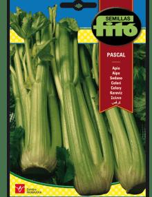 Apio Verde Pascal