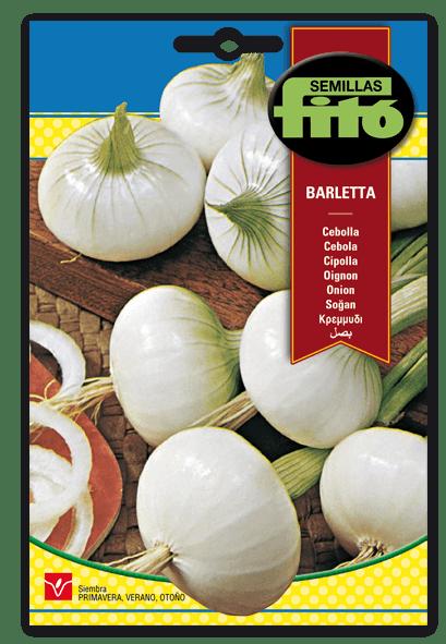 Cebolla Barletta