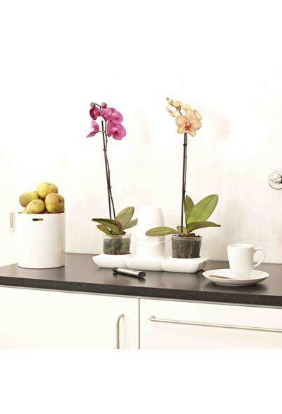 Minigarden Basic con flores