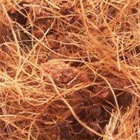 Fertilizantes para cultivo en coco
