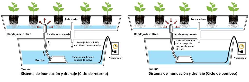 cultivo hidropnico parte