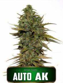 Semillas de marihuana Auto AK Gea Seeds