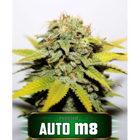 Semillas de marihuana Auto M8 Gea Seeds