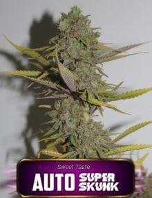 Semillas de marihuana Auto Super Skunk Gea Seeds