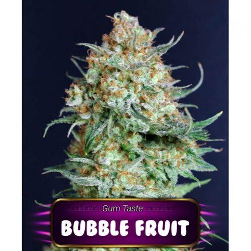 Semillas de marihuana Bubble Fruit de Gea Seeds