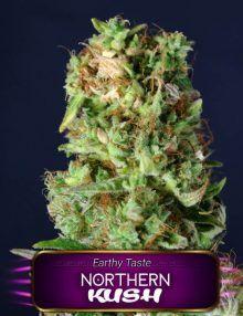Semillas de marihuana Northern Kush