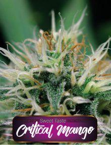 Semillas de marihuana Critical Mango de Gea Seeds