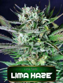 Semillas de marihuana Lima Haze de Gea Seeds