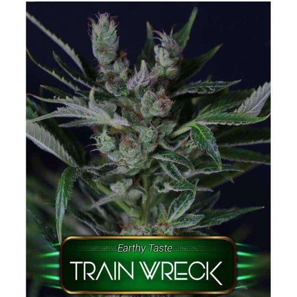 Semillas de marihuana Train Wreck de Gea Seeds