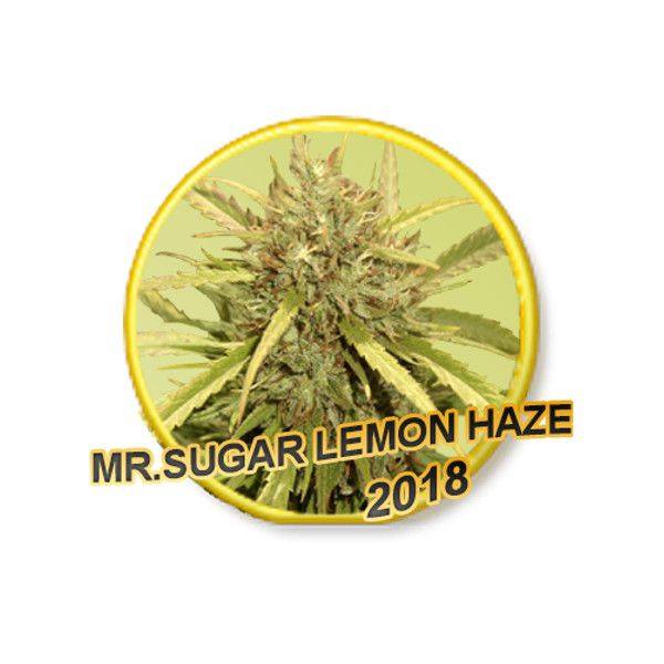 Mr. Sugar Lemon Haze de Mr. Hide Seeds Bank