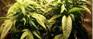 Cultivo indoor con HidroHug F8