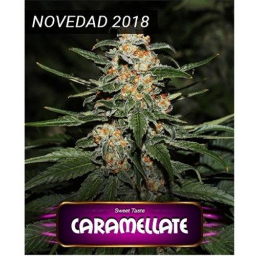 Semillas de marihuana Caramellate de Gea Seeds