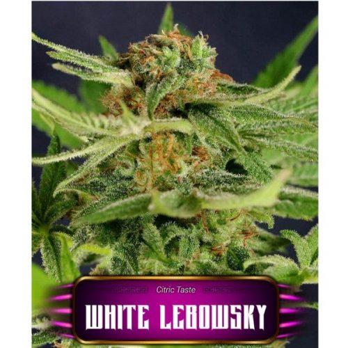 Semillas de marihuana White Lebowsky