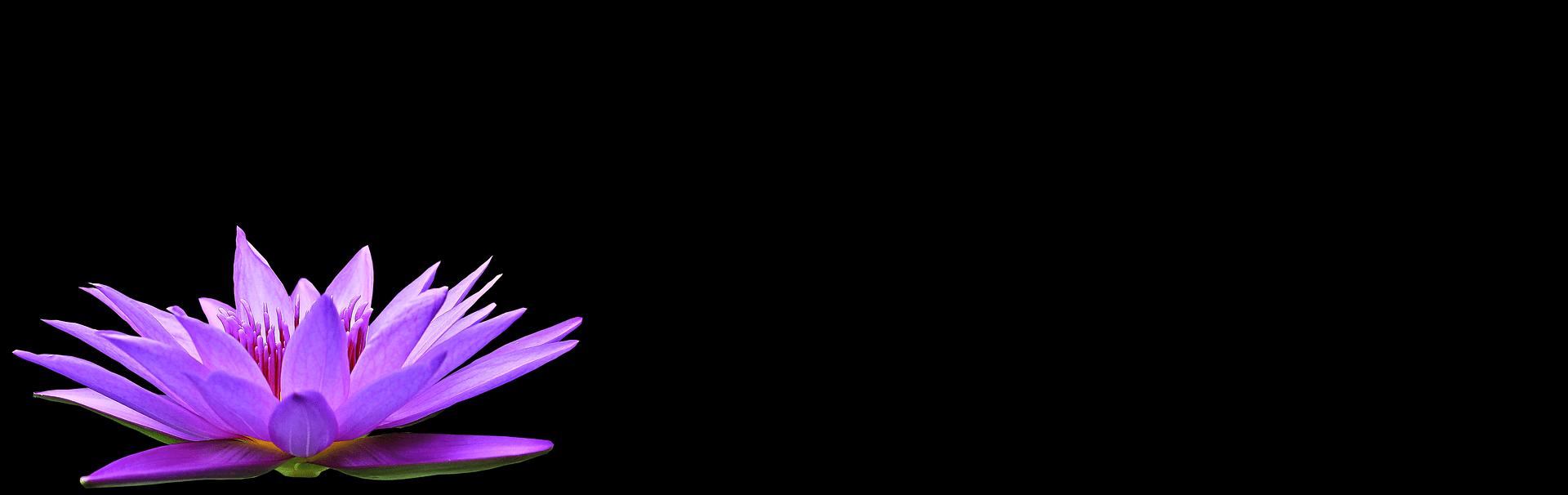 Banner floración Canna