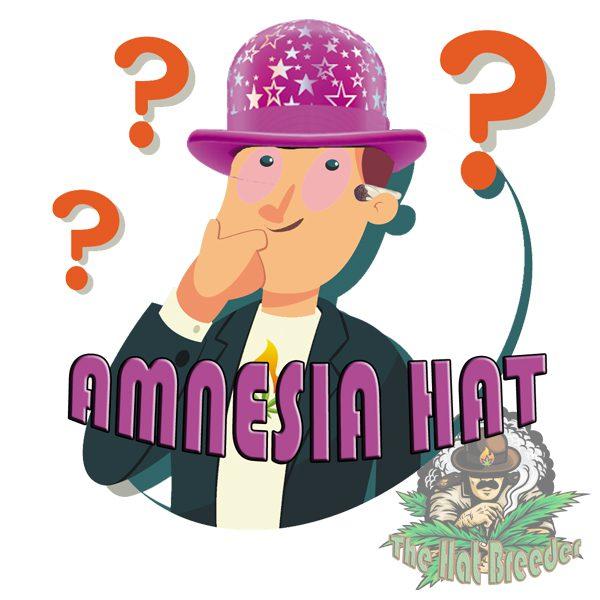 Amnesia-Hat---The-Hat-Breeder
