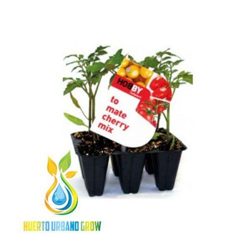 Hortícolas Pack 6 Hobby Saliplant