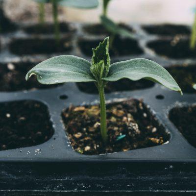 Plantas vivas