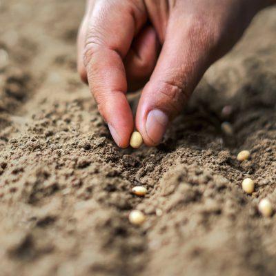 Semillas hortícolas